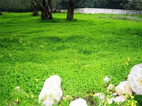 VOGLIAMO partecipare alla progettazione del Punto Verde Qualità nel NOSTRO quartiere !