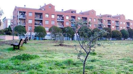 """COME E' ANDATA A FINIRE !! Nell'ambito della """"FESTA DELL'ALBERO 2011"""" di LEGAMBIENTE sono stati piantati nel nostro parco gli alberi consegnateci dal Comune di Roma"""